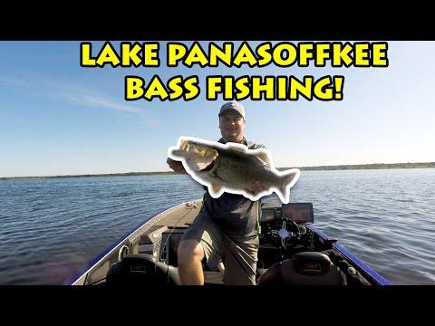 INSANE Topwater Blowups - Lake Panasoffkee Bass Fishing