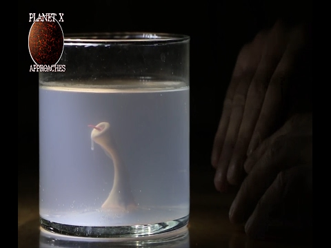 Man creates Monster in his basement with Sperm and Chicken Egg  Home Alchemy!