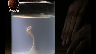 Man creates Monster in his basement with Sperm and Chicken Egg - Home Alchemy! thumbnail