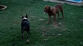 Tatu E Zeus Brincando