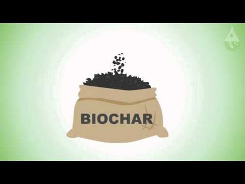 All About Biomass