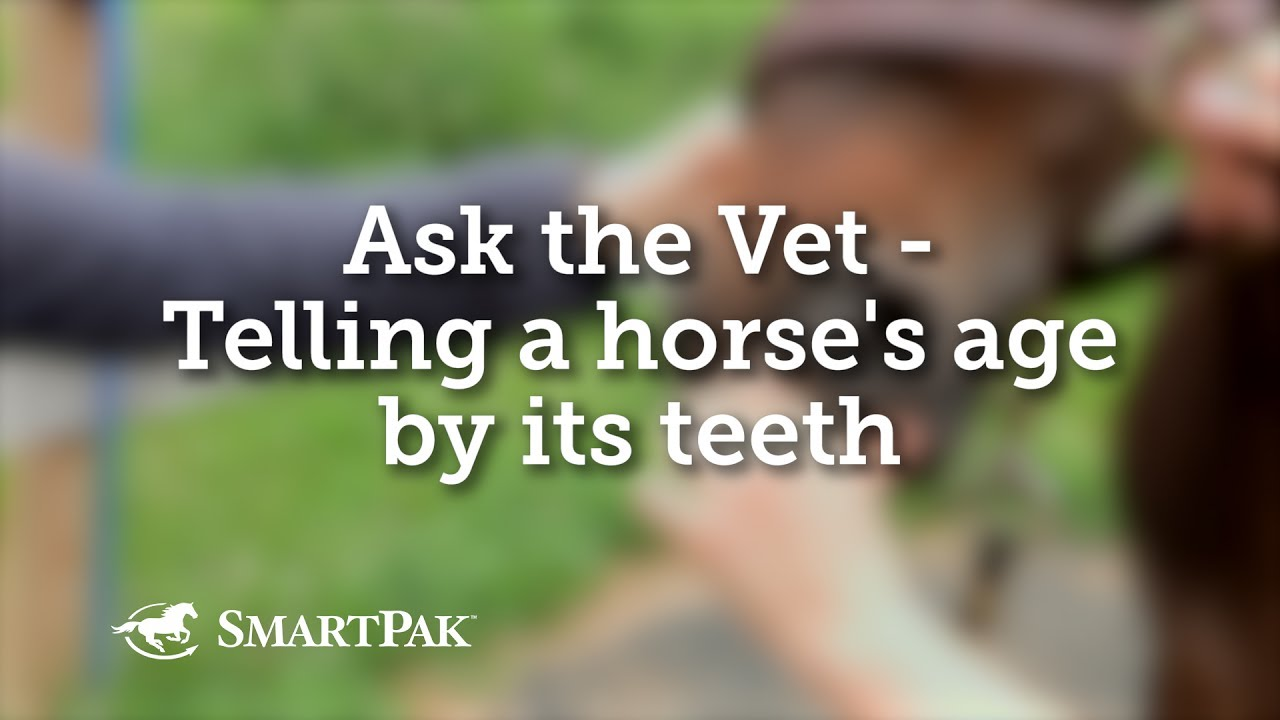 Ask The Vet Telling A Horse S Age By Its Teeth Youtube