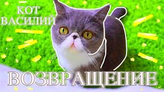 ВАСЯ ЭКЗОТ ВОЗВРАЩЕНИЕ/КОТ ВАСИЛИЙ////