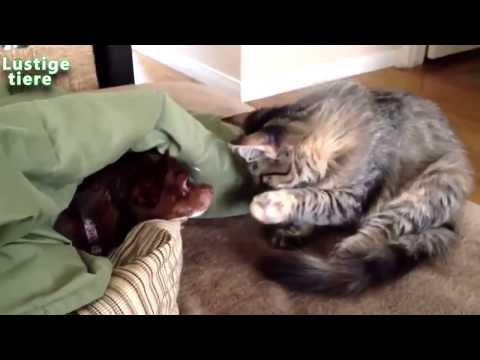 20 Minuten Lag Lustige Tiere Compilation May 2014