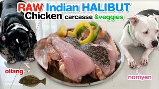 Pit Bulls eat RAW Indian Halibut fillets and chicken carcasses and ...