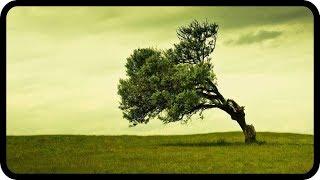 Echte Hingabe als Schlüssel für Erfolg, Glück und Zufriedenheit - Andreas Beutel