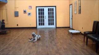 San Antonio Dog Training Co. Ace