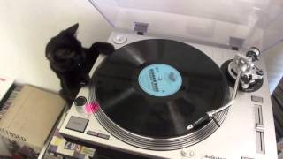 DJ Ringo - Cat playing vinyls (Gato DJ)
