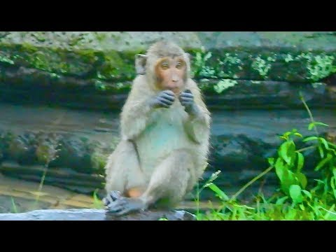 Orphan girl Jessie try to find food during raining and got cool / Monkey Post
