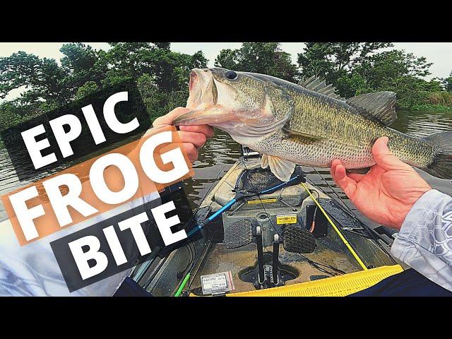 Lake Conroe Kayak Bass Fishing (EPIC Frog Catch!!!)