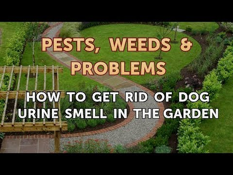 How To Get Rid Of Dog Urine Smell In The Garden