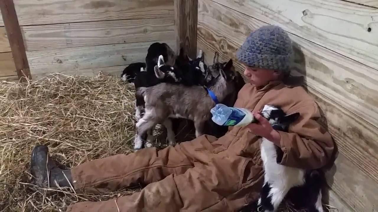 Bottle Feeding The Baby Goats Youtube