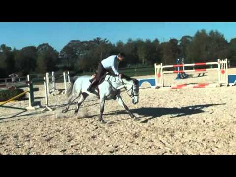 Vivaldi - Gelding Born in 2002 ( Hold Up Premiere ) - by Kevin Gielen