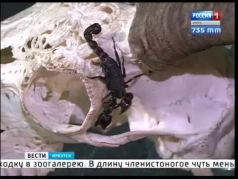 Опасного скорпиона нашли в коробке с цветами в Иркутске
