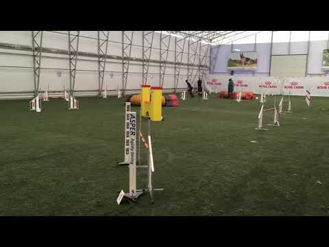 bearded collie Leo A3, Jumping course, 09.03.2019 Maardu