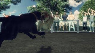 アメリカ・アラバマ州およびジョージア州で8月26日、違法な闘犬賭博...