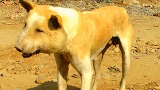 Rescuers Were Alarmed When They Found This Dog – But Now He Looks Like A Different Animal