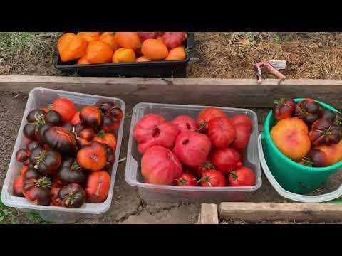 Вопрос: Дачники Удмуртии, подскажете какие сорта овощей и фруктов сажаете?