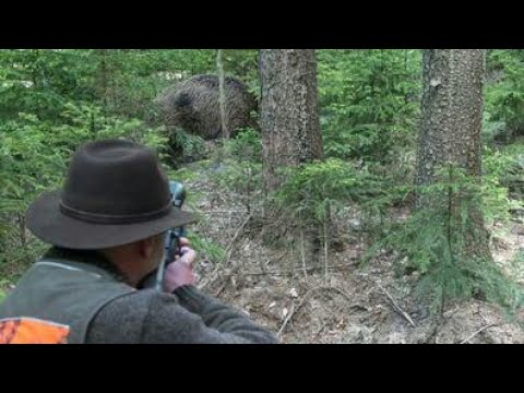 Best Shots of Wild Boar Hunting,Wildsau Jagd,Chasse Au Sanglier
