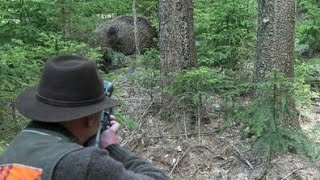 Best Shots of Wild Boar Hunting,Wildsau Jagd,Chasse Au Sanglier thumbnail
