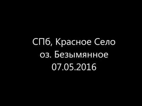 СПб, Красное Село, оз. Безымянное, щуренок на спиннинг.