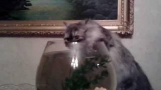 У кошки сушняк ))))) после валерьянки
