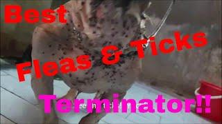 NexGard The Ticks & Fleas Terminator