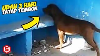 Anjing ini sudah 3 Hari Nonstop Berdiri Menatap Tembok Stasiun, Mengejutkan Ternyata ini alasannya..