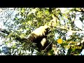 Endangered gibbon spotted in SW China