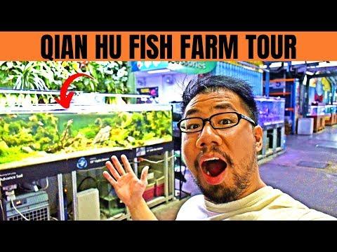 QIAN HU FISH FARM TOUR   Arowana Breeding Ponds, Fish Gallery & More!