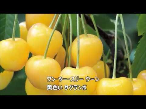 黄色いサクランボ ゴールデンハーフ cover ゆめ&ちか