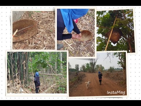 Collecting Moot Daeng - Fire in the Trees