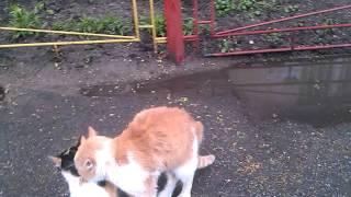 Кошачий секс кошачая порнуха возле дома