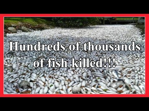Hundreds of thousands of fish killed in Florida!!! End Times Signs 28th March 2016