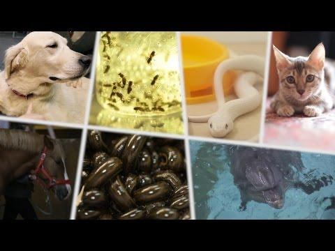 Топ-семь полезных для здоровья животных