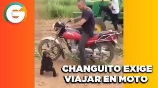 Changuito exige viajar en Moto