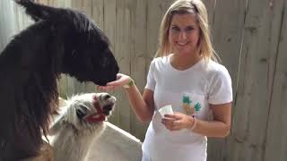 CUTE PET UNEXPECTED Animal ATTACKS!   AFVs Wildest Animal Moments NEW 2019