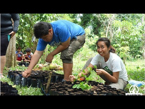 6 Environmental Organizations In The Philippines You Can Volunteer For