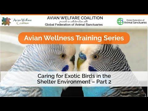 AWC - Avian Welfare Coalition - Webinars