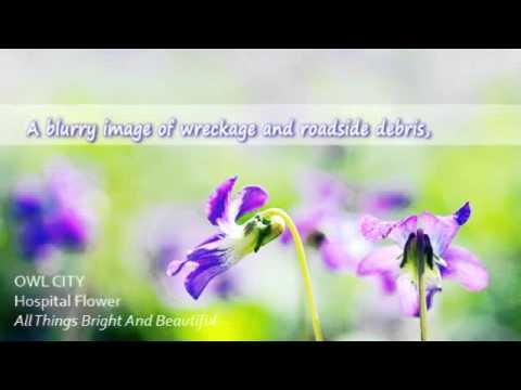 Owl City - Hospital Flowers with Lyrics on screen