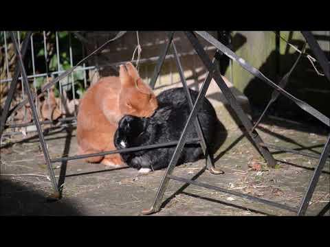 Konijnen Orry en Naranja zijn elkaar lief aan het wassen