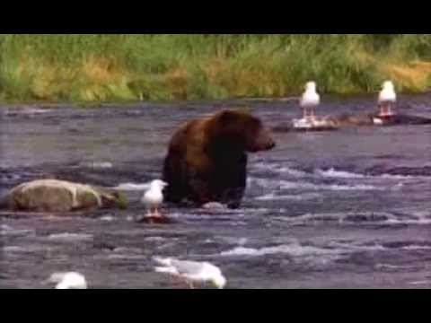 Funny Homeless Bear