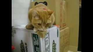 ご飯が待ちきれない猫 Very hungry cat