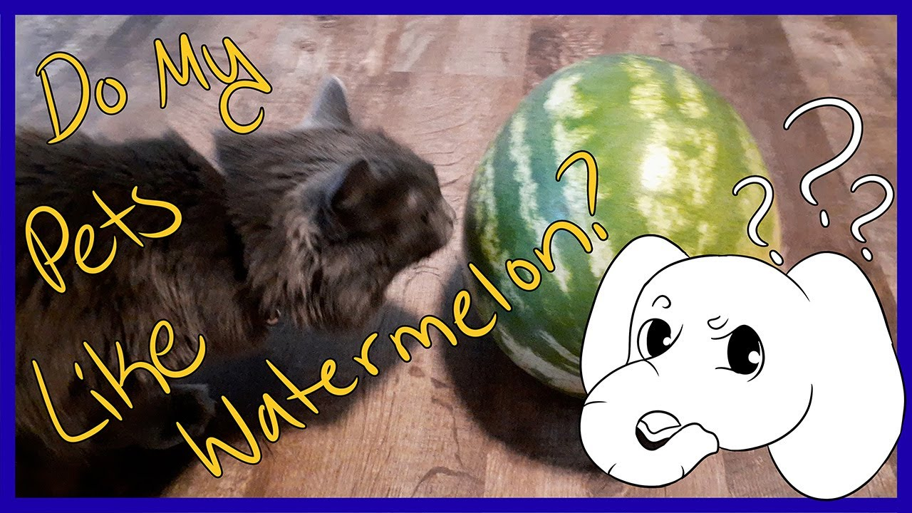 A Watermelon Video