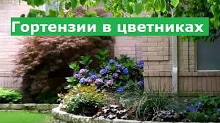#Гортензия садовая в цветниках  #Ландшафтный дизайн своими руками
