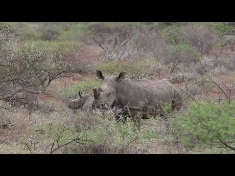 Limpopo Safaris