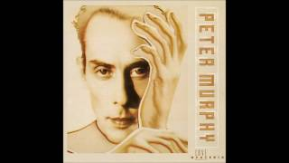 Watch Peter Murphy Socrates The Python video