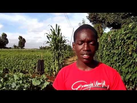 Mkulima Young Champion - At just 18 years of age, University of Nairobi Law student and farming!!