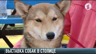 Выставка собак: от русских до японских пород