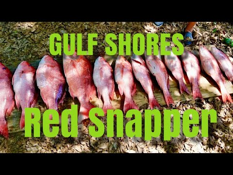 Gulf Shores Red Snapper Fishing Trip Opening Weekend 2019